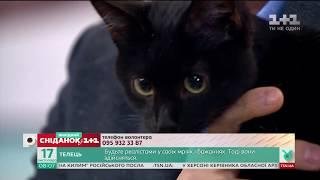 Симпатичні чорні котики шукають новий дім