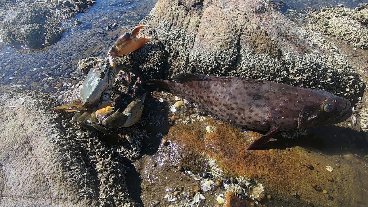 阿波在岸上遠遠發現水里一條大貨,過去一撈,大貨嘴里竟吃著海貨 - YouTube
