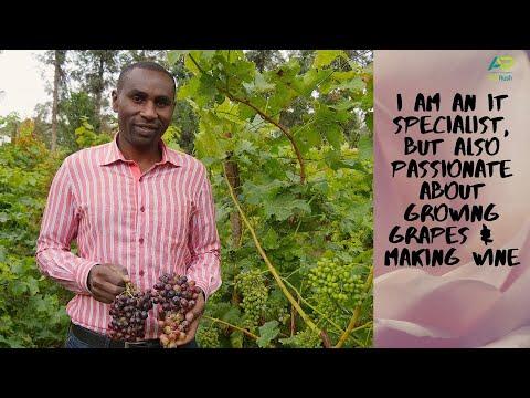 Kenya: Grapes & Wine Making