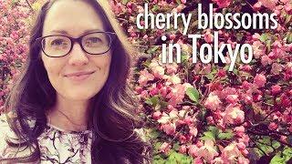So pretty I cried. (cherry blossoms in Tokyo)