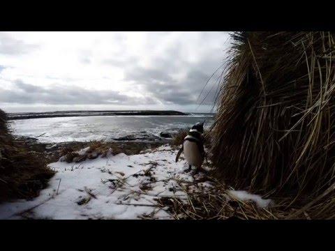 GoPro HD: The Falklands. 2015.