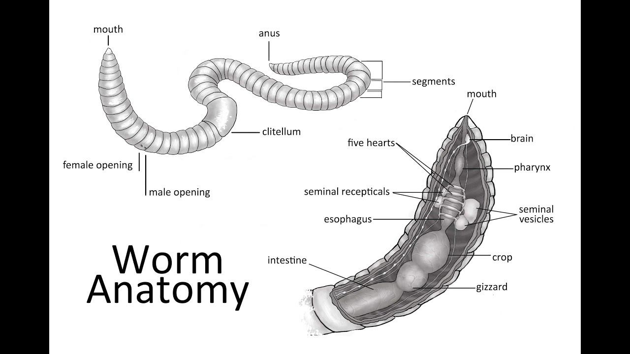 What To Look For When Identifying Worms
