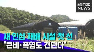 """새 인삼 재배 시설‥""""큰비·폭염도 견딘다&qu…"""