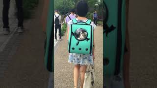 Cat looks out window from back pack