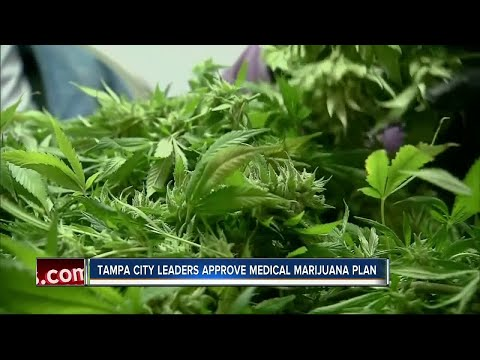 Medical marijuana gets the green light in Tampa