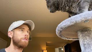 teaching-my-cat-about-predators