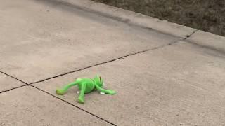 Kermit Gets Hit by Car
