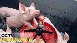 [国际财经报道]热点扫描 两部委:六大措施鼓励生猪生产 保障市场供应| CCTV财经