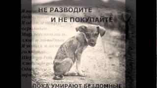бедные животные (люди будьте людьми)