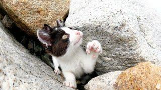岩場に隠れる子猫を猫じゃらしを使って一本釣りしてみた