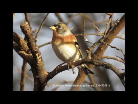 American Birding Podcast 01-02: The Big Big Year Episode