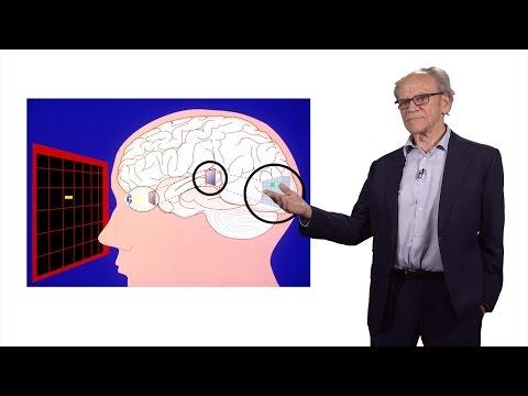 Torsten Wiesel (Rockefeller University): Exploring The Visual Brain