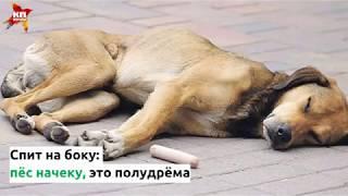 Что означают позы для сна и игр у собак