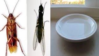Se Você Colocar Esta Água No Canto De Sua Casa, Você Vai Matar Todas as Baratas e Moscas Para Sempre