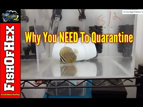 Why You Always Need To Quarantine In The Saltwater Hobby