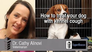 How Treat Your Dog Kennel Cough
