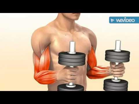 Bodybuilding  |  Latihan Membentuk Otot Bicep/ Lengan bagian Depan