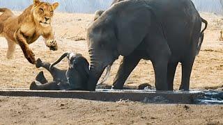 видео: Животные Спасают Друг Друга! Это Очень Трогательно!