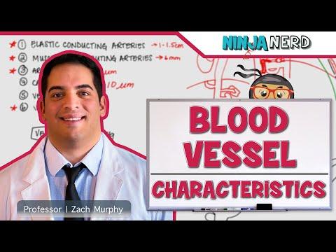 Cardiovascular | Blood Vessel Characteristics