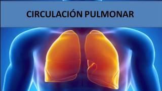 Circulación pulmonar de la sistémica función