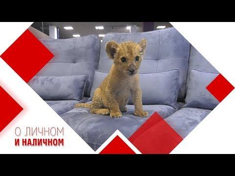 Как выбрать диван в гостиную? Мнение специалиста.