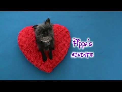 Pippa's advents - 1st to 7th December a celebration of her ickle life