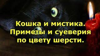 Кошка и мистика. Приметы и суеверия по цвету шерсти.