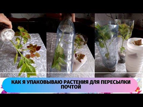 Один день из жизни блогера-цветочницы. Упаковка комнатных растений для отправки почтой