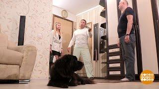 Дмитрий Талабуев собаке друг.  08.07.2019