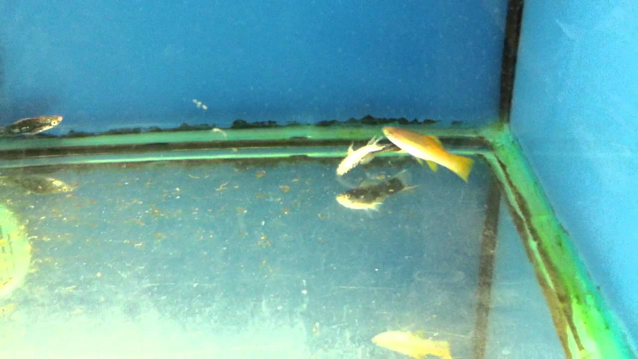 Dead fish at walmart aquarium pet section youtube for Walmart freshwater fish