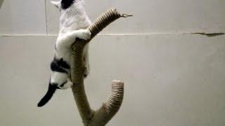 Когтеточка для котов своими руками