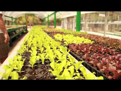 "Green Acre's ""I Aquaponic"""
