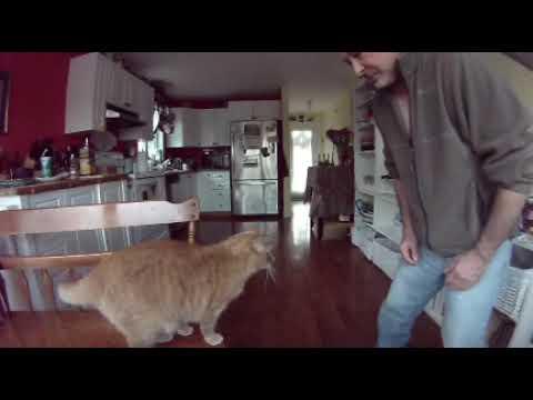 CAT TRICKS Train your cat