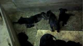 18 щенков в добрые руки