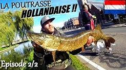 BROCHET 104cm dans les POLDERS hollandais !! SEJOUR REUSSI ✓