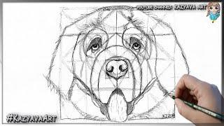 Как нарисовать собаку породы Сенбернар карандашом поэтапно.