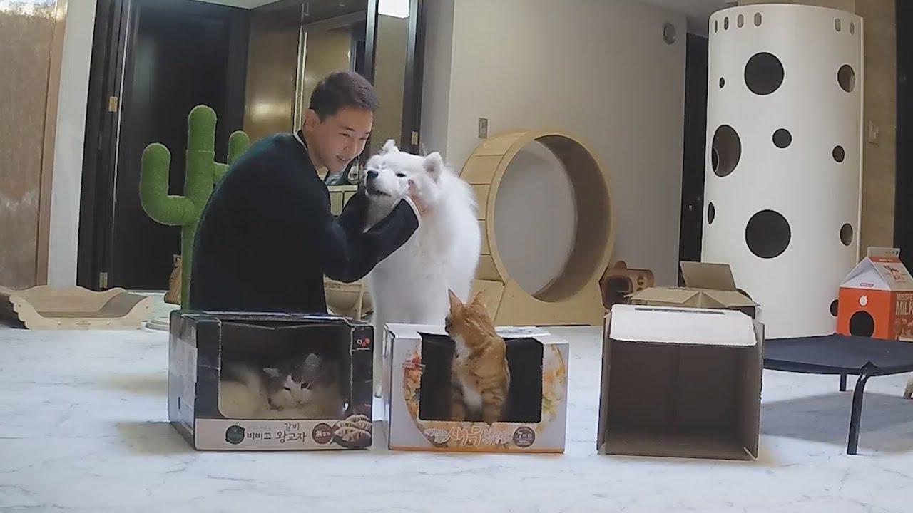 고양이들은 상자를 얼마나 좋아할까?