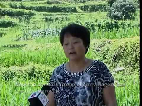 China  Rice fish culture, generating ecological, economic and social benefits