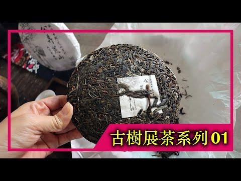 《古樹展茶系列》EP.01|2021年公弄荒山古樹純料(4K UHD)【藝寶堂台灣張哥】
