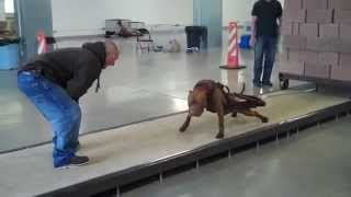 Utah Working Dogs pull over 5000 pounds!! thumbnail