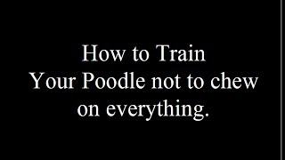 Teaching Your Poodle Not To Chew- Free Mini Course - Biting Visitors- Aggressive Behavior