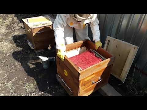2.Развитие от пчелопакета до пчелосемьи