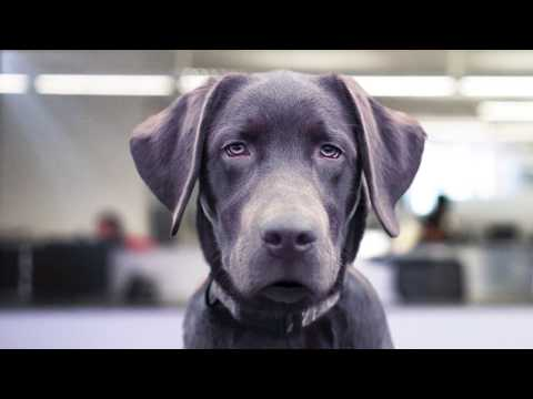 dog-training-you-can-trust-(petco)