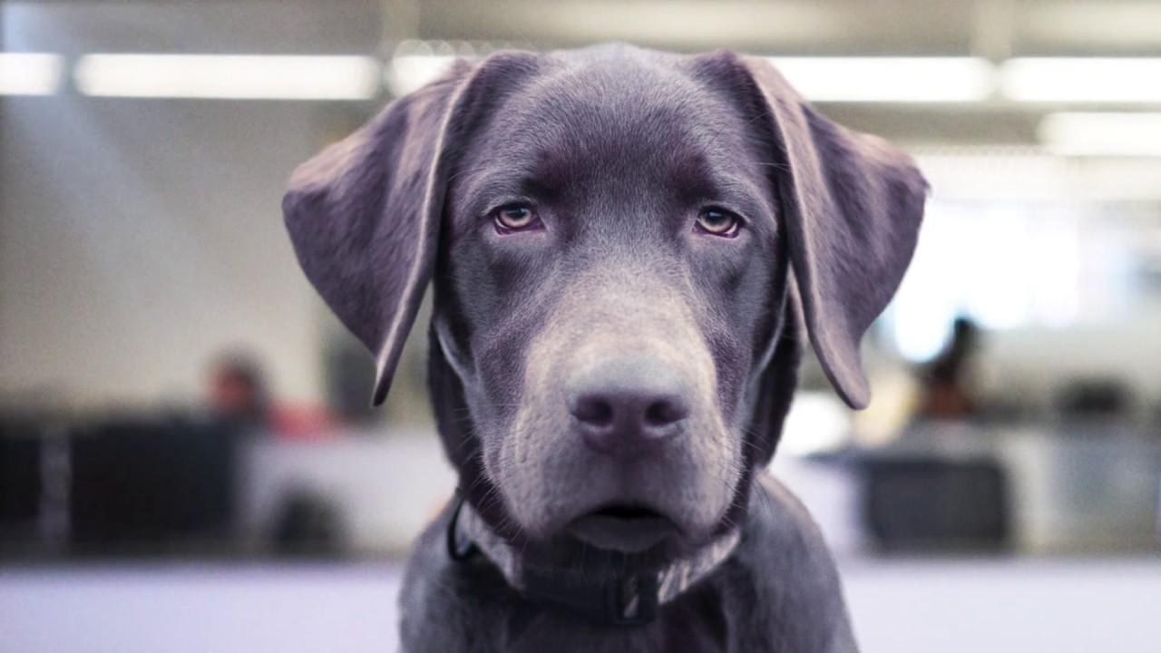 Petco Dog Training Classes