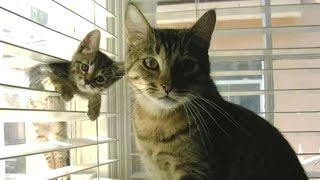 Cute is Not Enough - Cute Cats and Kittens Doing Funny Things 2018 #10