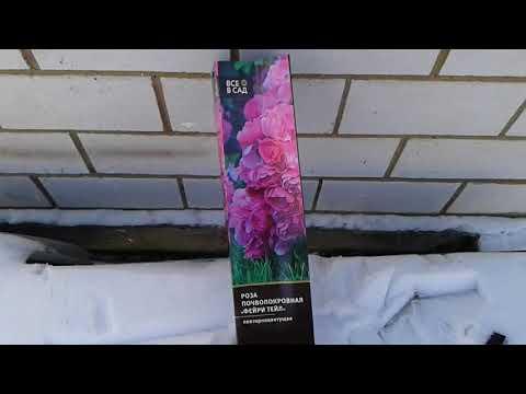 Вы купили розу зимой.Как сохранить её до весны