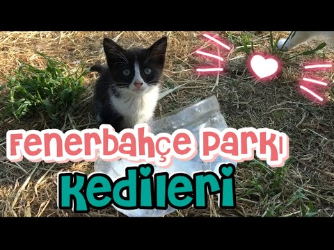 Fenerbahçe Parkındaki Sokak Kedileri