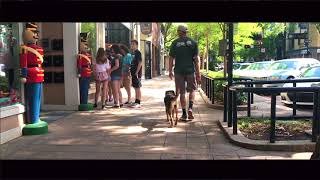 Rottweiller Mix Breed, Bailey | Off Leash Dog Training | Greenville SC Dog Trainers