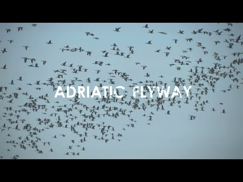 Adriatic Flyway - The Central European Route for Migratory Birds