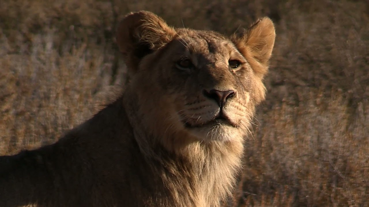 Download This is Kgalagadi, South Africa movie
